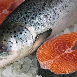 Форель,  семга,  рыба,  морепродукты